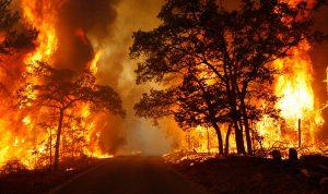 Tăng cường công tác tuyên truyền an toàn PCCC rừng năm 2017